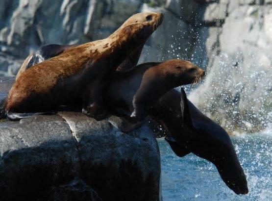 Морская экспедиция «К обитателям морской стихии»
