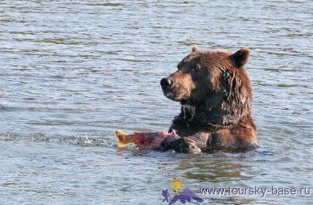 3D видеонаблюдение за медведями на реке Камбальная