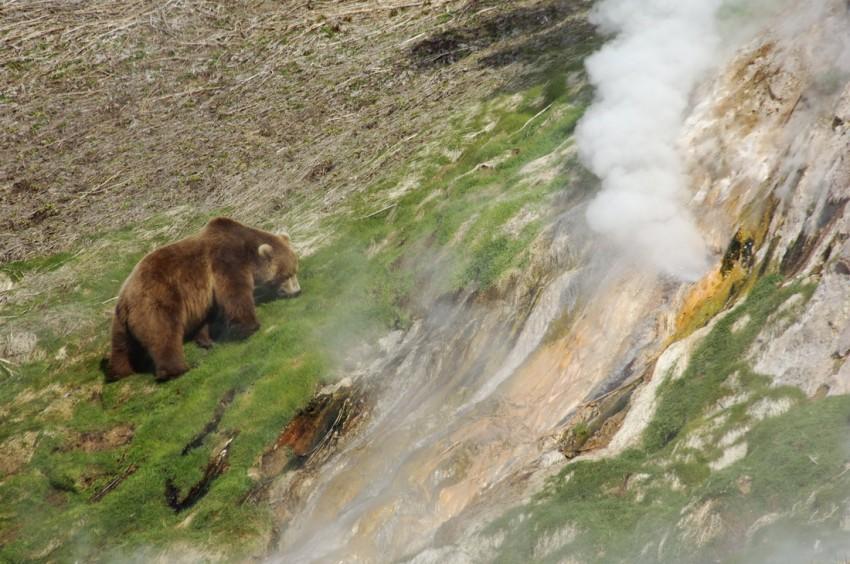 Долина гейзеров в ТОП-100 туристических брендов России