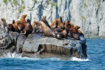 Морская прогулка к острову Старичков